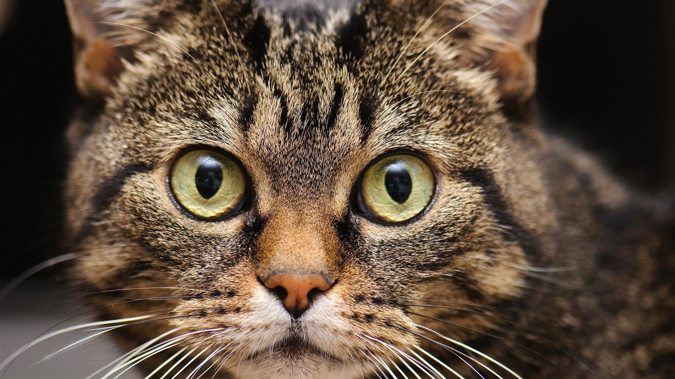 muzzle_cat_whiskers-Animal_Photo_Wallpaper2014.6.12