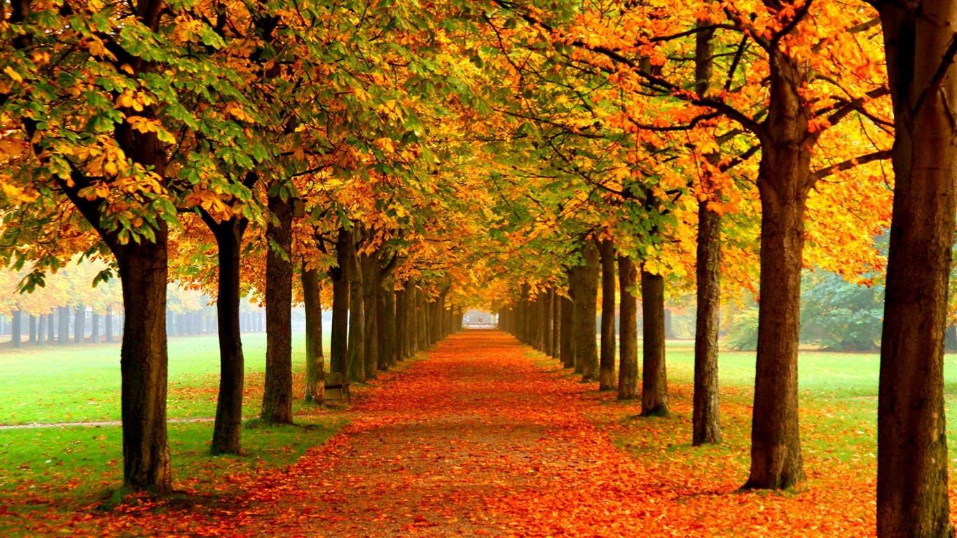 秋の美しい 風景写真の壁紙プレビュー 10wallpaper Com