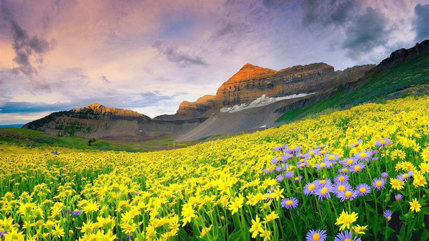 Beautiful Mountain Flowers-Scenery HD Wallpaper Preview
