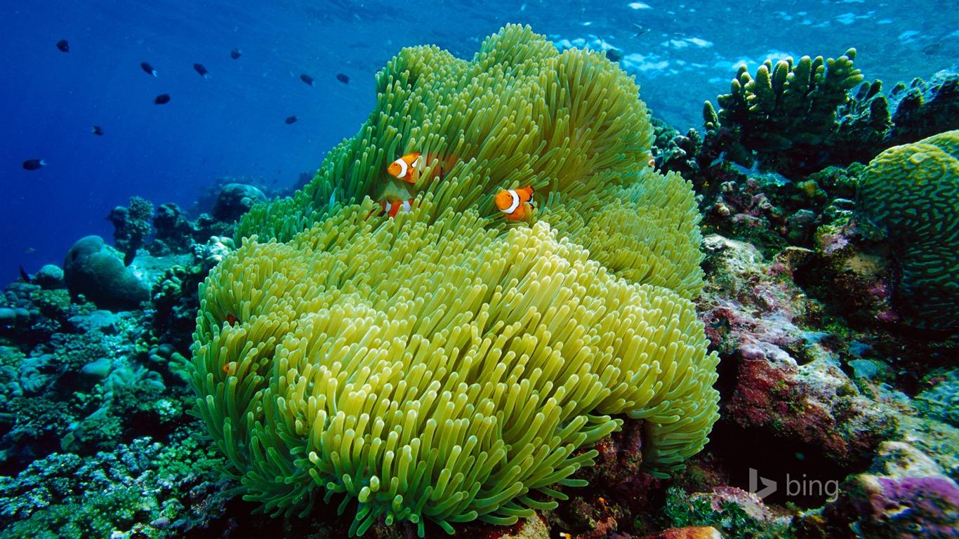 Advertising Beautiful Underwater Creatures Bing Theme Wall