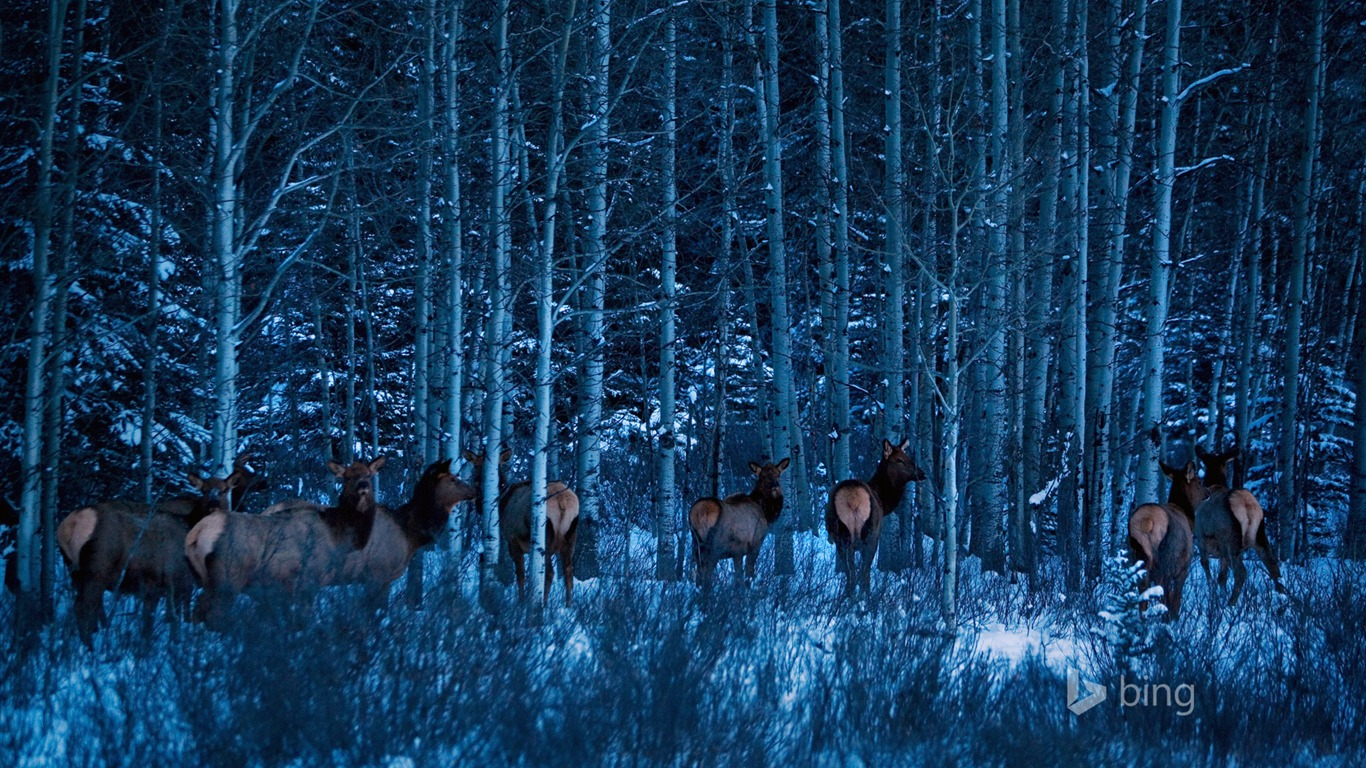 Must see Wallpaper Forest Deer - Deer_winter_forest-Bing_theme_wallpaper_1366x768  Best Photo Reference_92523 .jpg
