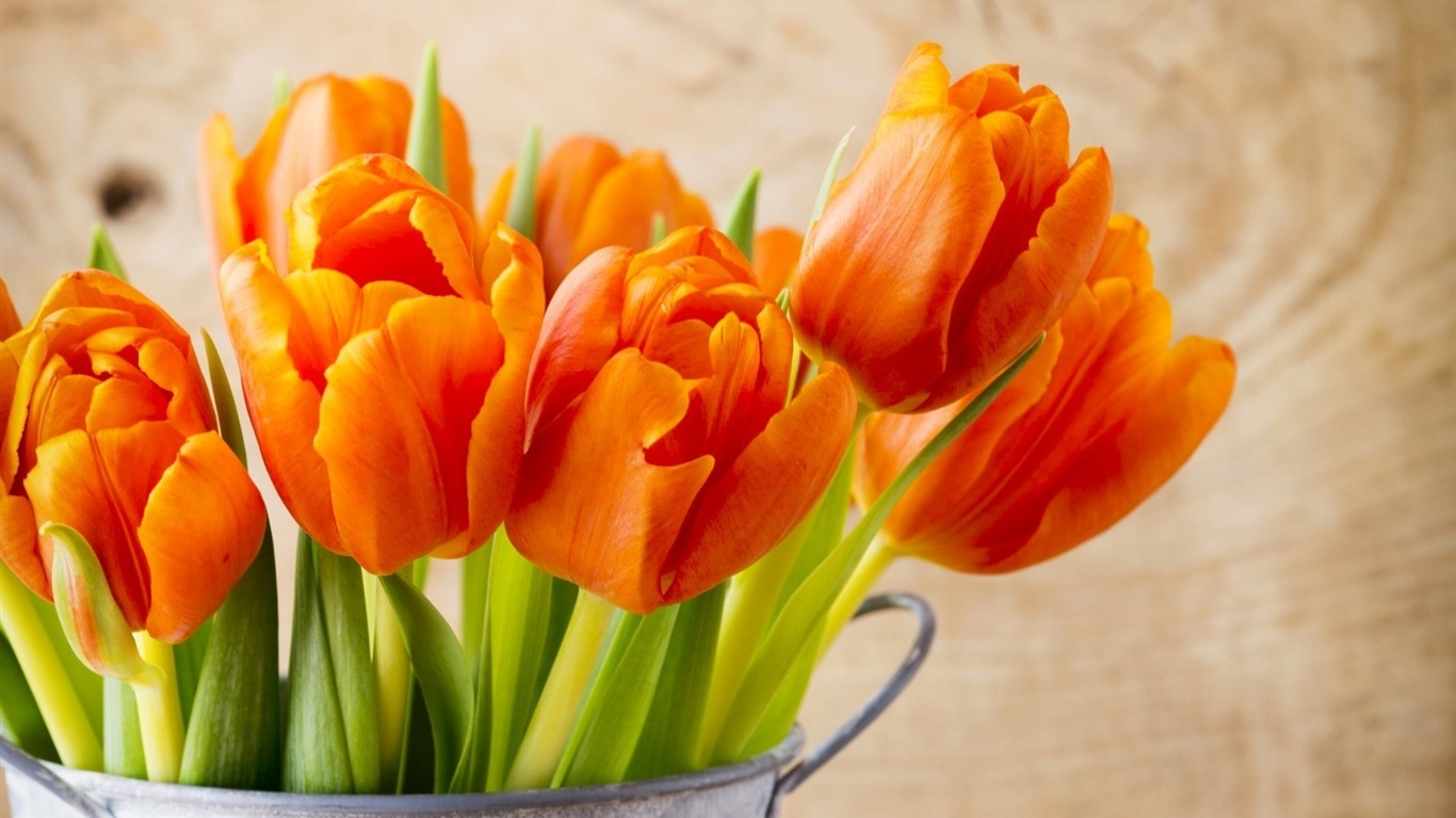 beautiful_orange_tulips-HD_Widescreen_Wallpaper2015.3.20