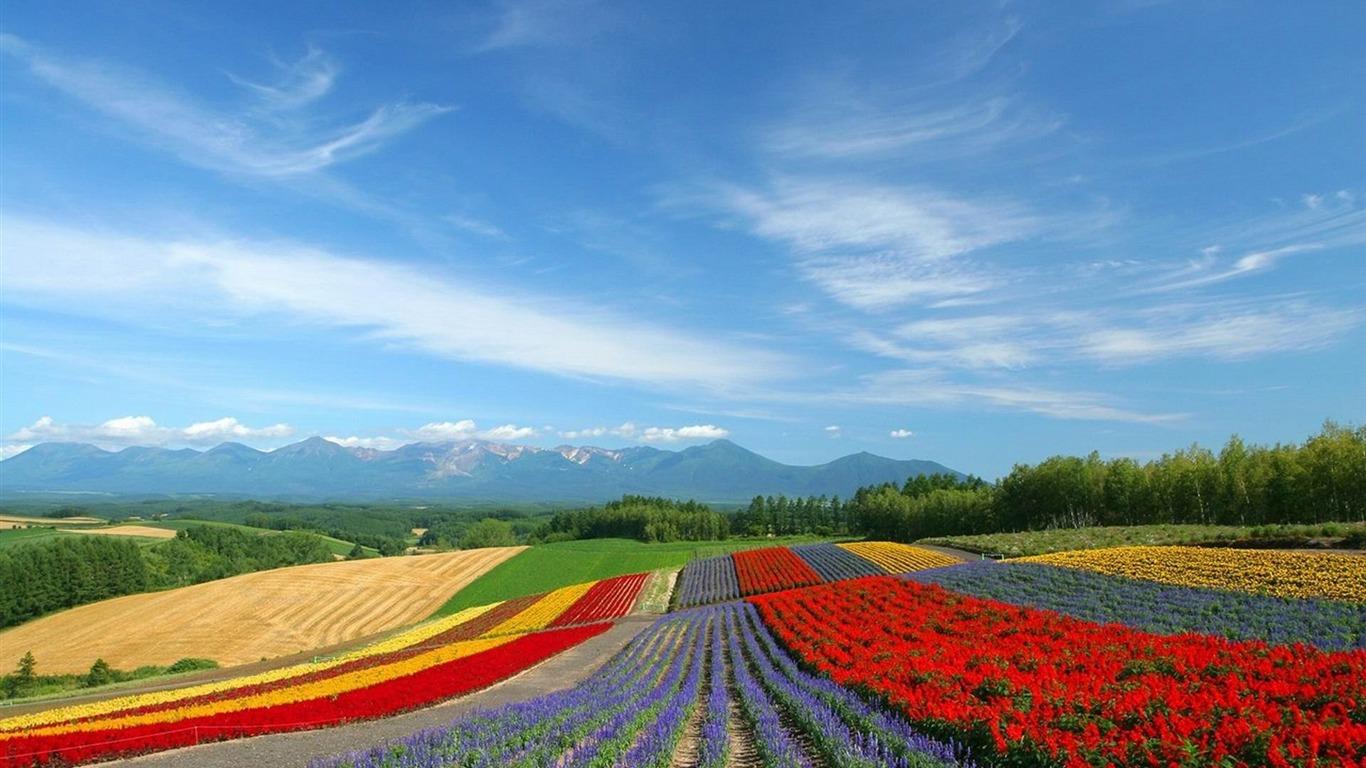日本北海道花 摄影桌面壁纸预览 10wallpaper Com
