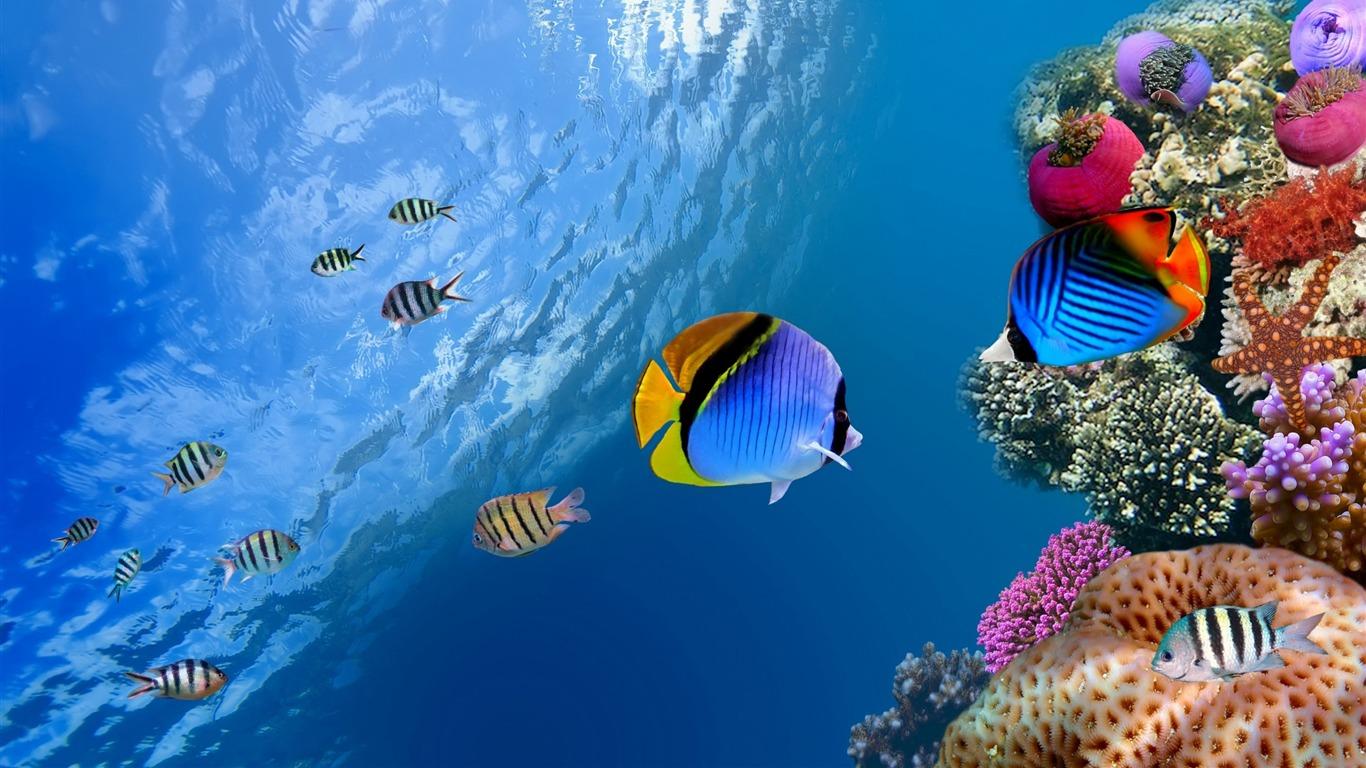 Escena De Coral Submarino Alta Calidad Fondo De Pantalla Hd