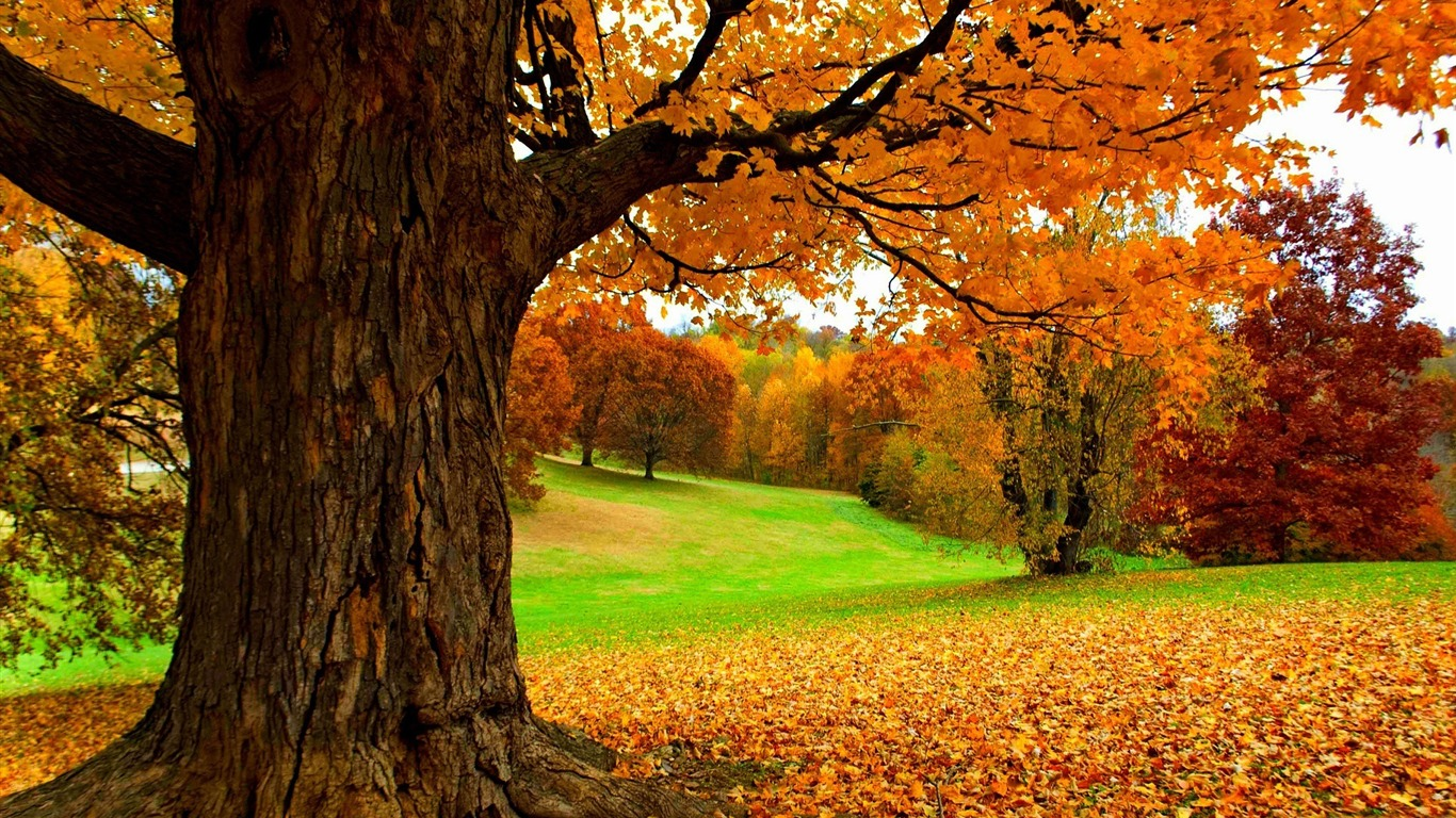 Autumn_under_a_yellow_tree-HD_Nature_Wallpaper2015.9.15
