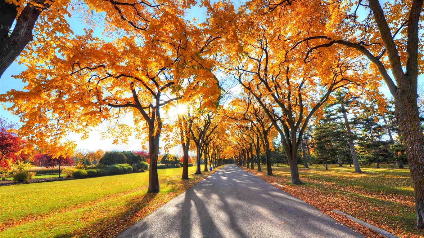 foto de parc paysage automne-Fond d'écran HD Nature Aperçu | 10wallpaper.com