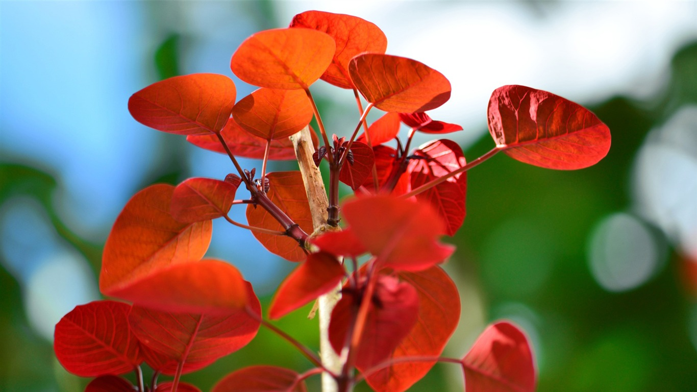 red_leaves_bokeh-High_Quality_Wallpaper2015.10.24
