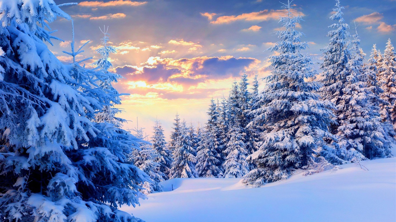 Trees_under_snow_forest-2015_Landscape_Wallpaper2015.11.8