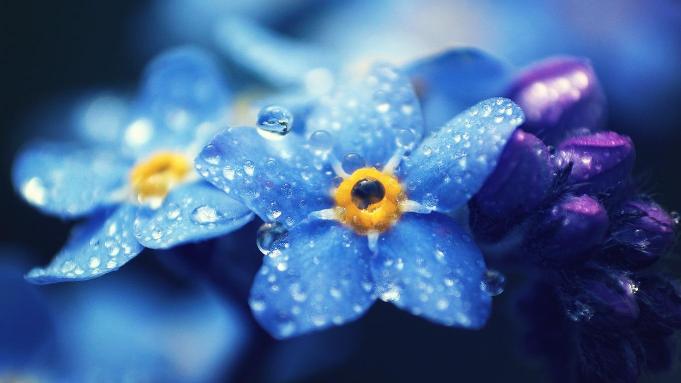 Flores Azules Gotas De Petalos De Alta Calidad Fondo De Pantalla Hd