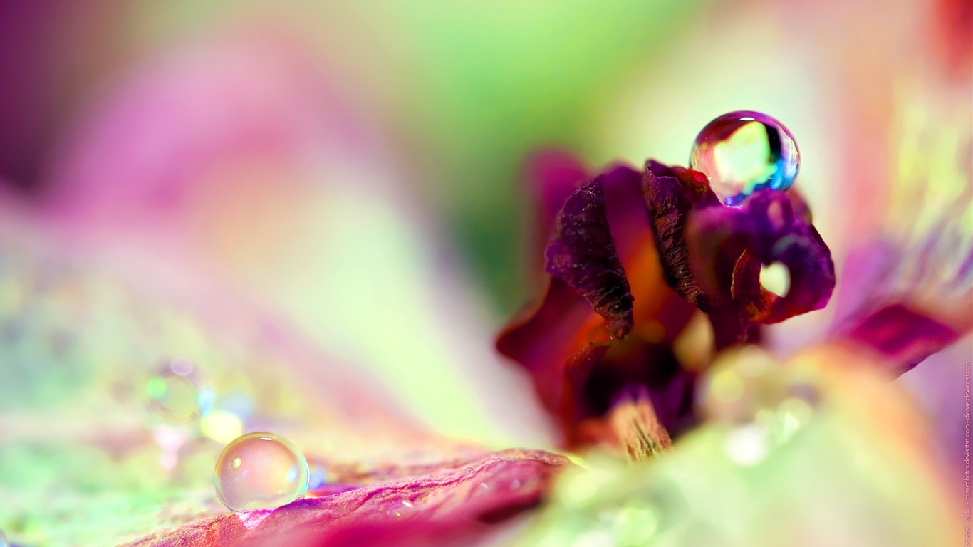 Flower_drop_dew_petals-High_Quality_HD_Wallpaper2015.12.22