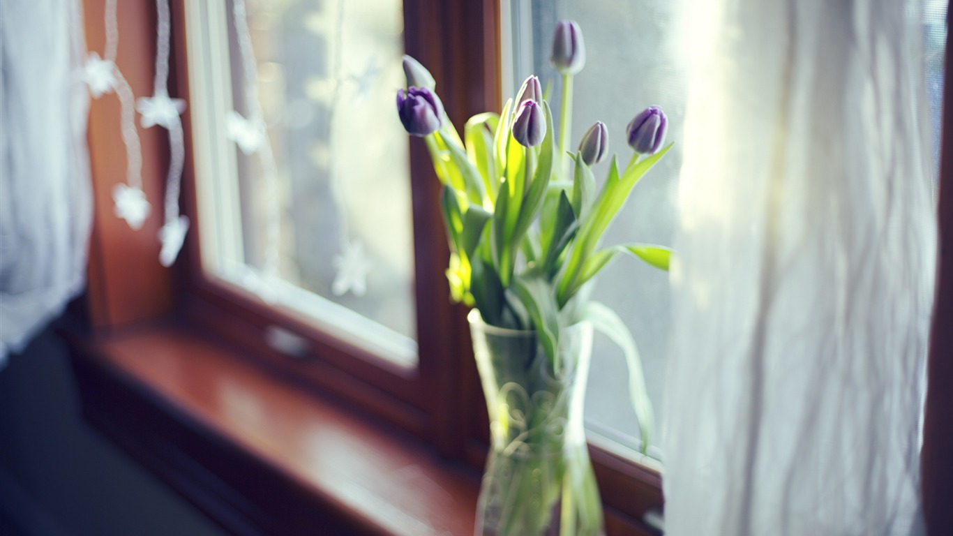 Tulips_flowers_vase_window-photography_HD_wallpaper2015.12.15