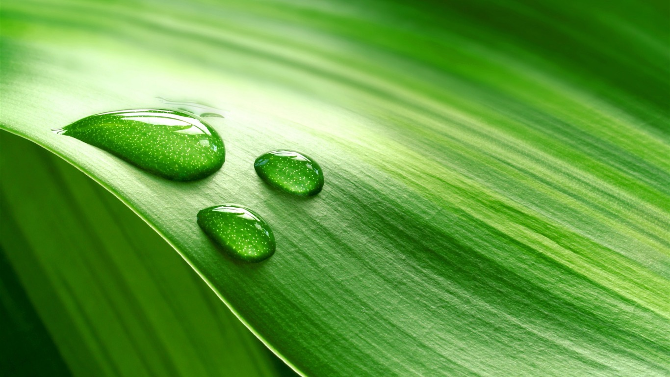 Green_leaf_drop-photography_HD_wallpaper2016.1.8