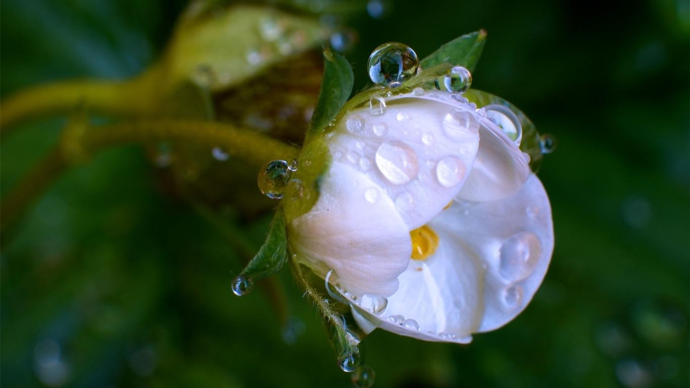 水滴白色的花 微距高清壁纸预览 10wallpaper Com