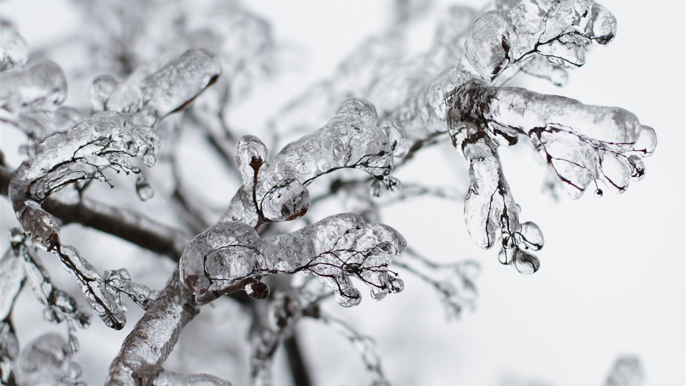 Frozen_twigs-Winter_Close-up_HD_Wallpaper2016.2.3