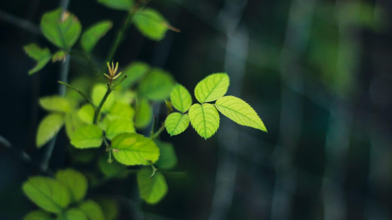 Jungle Green Leaves Macro Foto Fondo De Pantalla Hd Avance