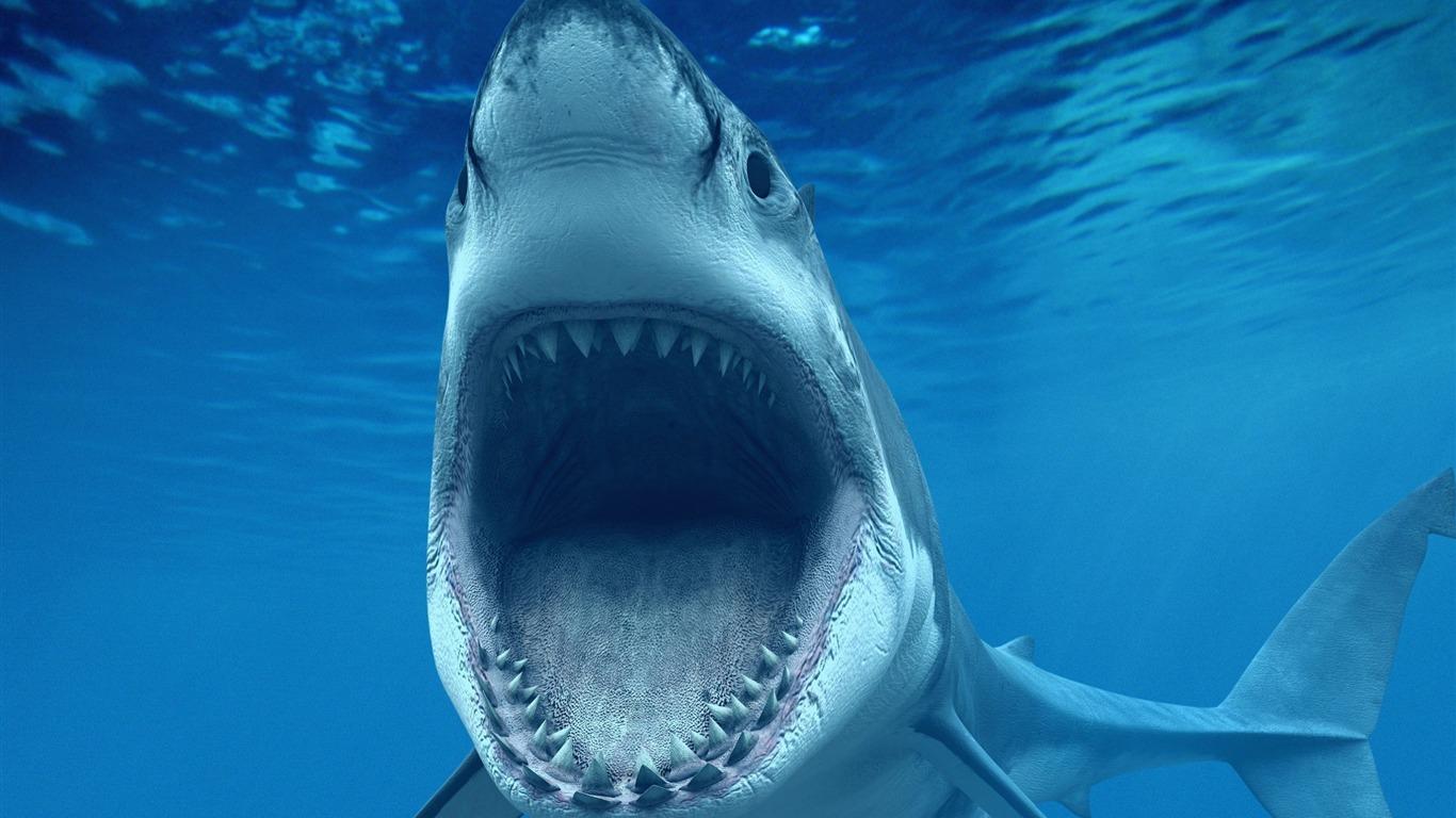 Requin Blanc Aruba Caribbean La Vie Marine Hd Fonds D écran