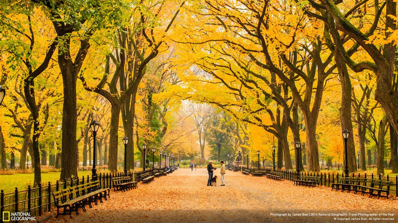 National City Auto Center >> Autumn at Central Park New York-2016 National Geographic ...