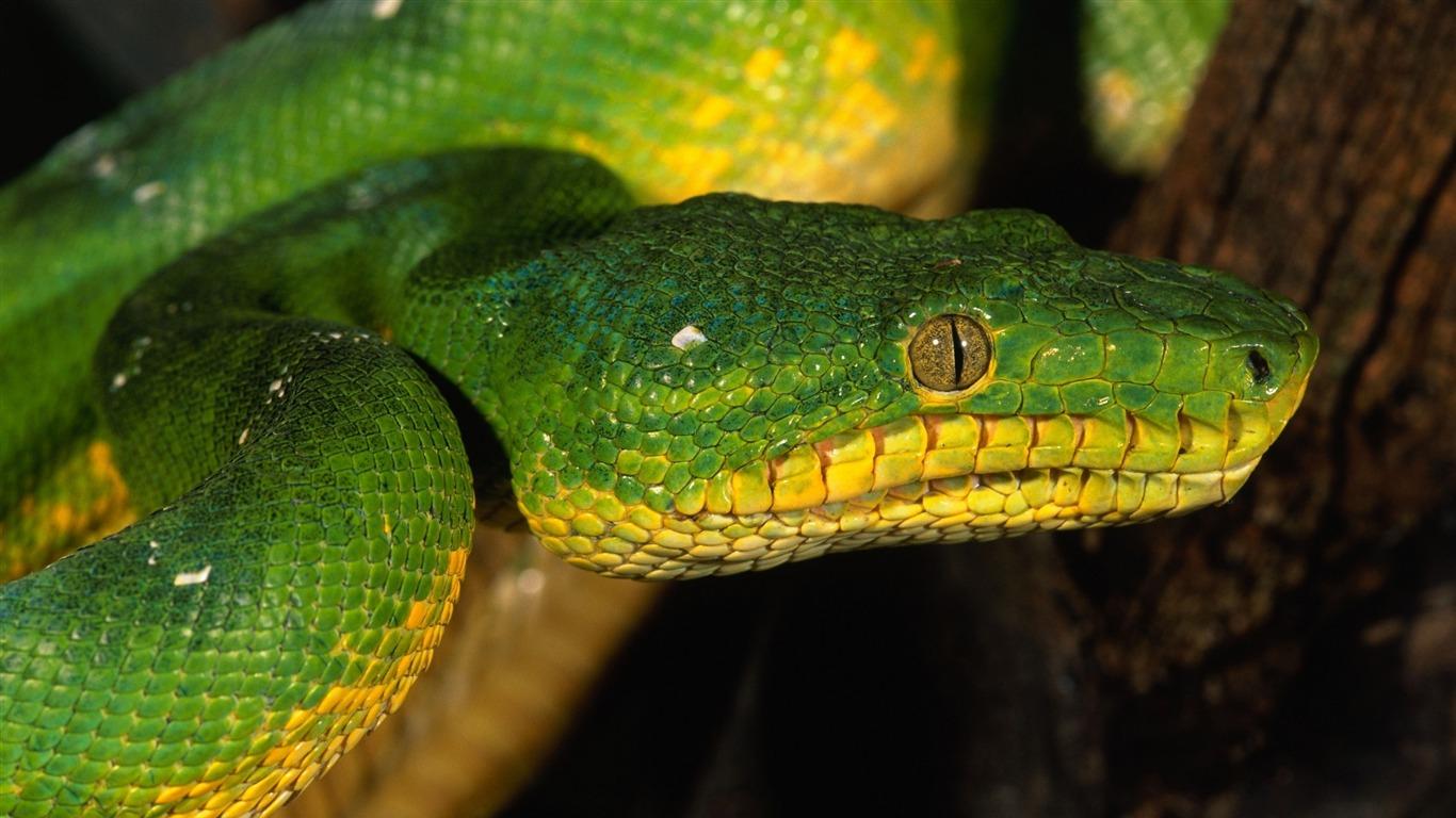 Rüyada Koyu Yeşil Sarı Renk Uzun Yılan Sürünürken Görmek