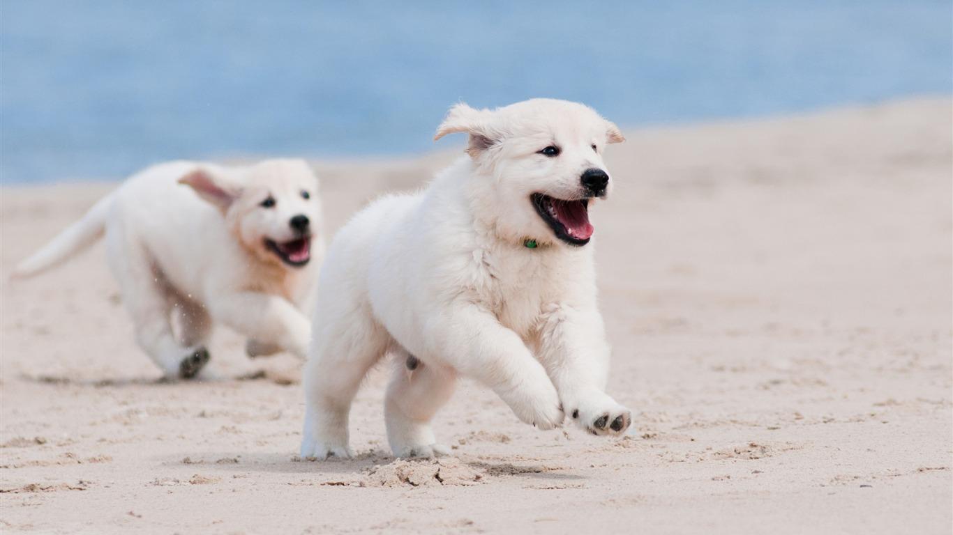 犬の子犬白ペット 動物写真のhd壁紙プレビュー 10wallpaper Com