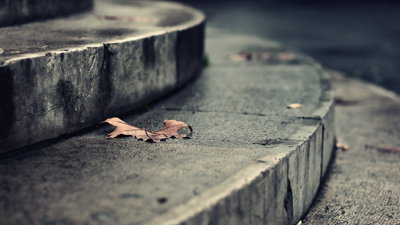 Dry_leaf_autumn_falling_stairs-2016_Macro_Photo_Wallpaper2016.8.1