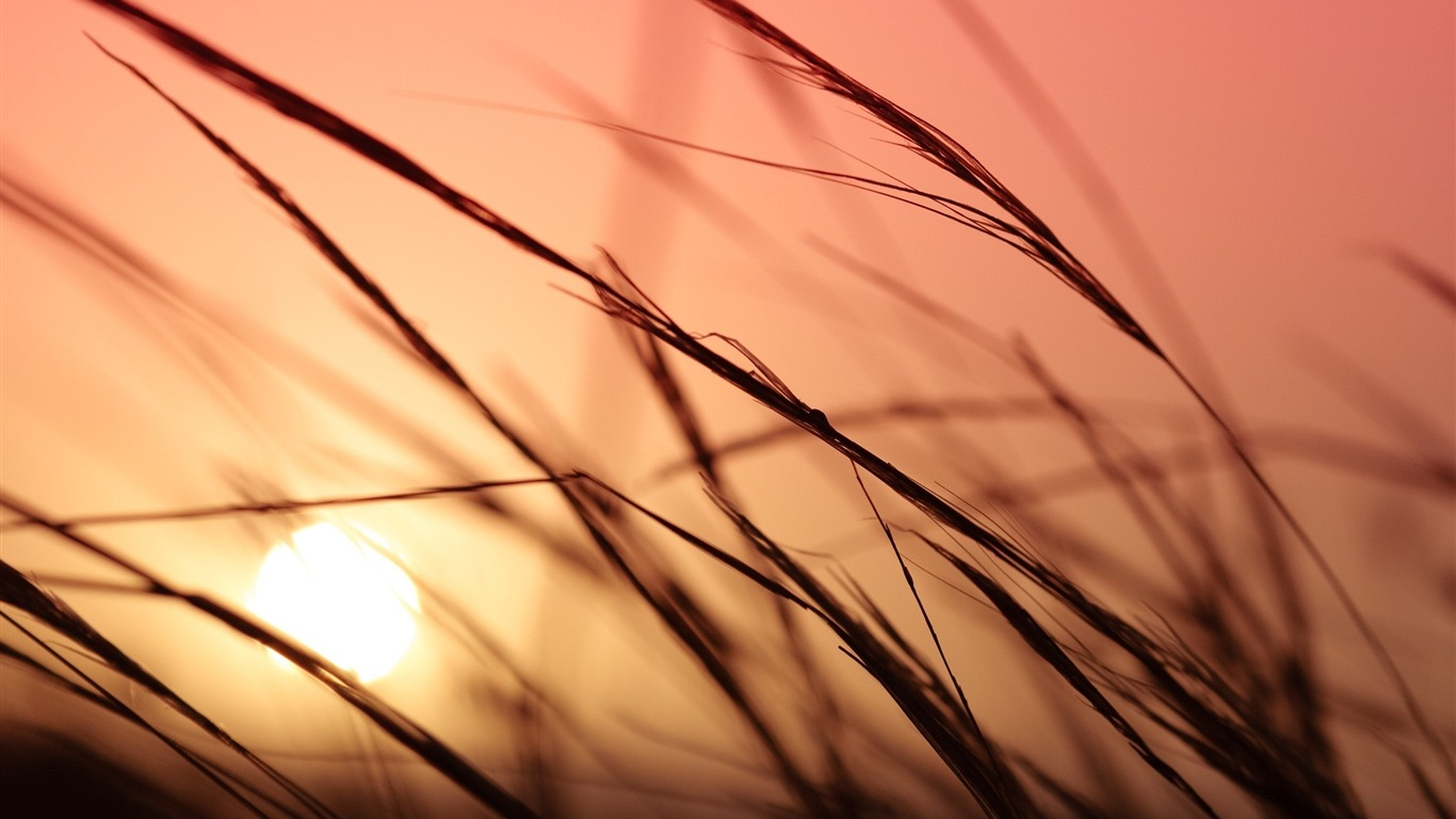 Grass_sunlight_sky_bokeh-Fresh_theme_wallpaper2016.8.27