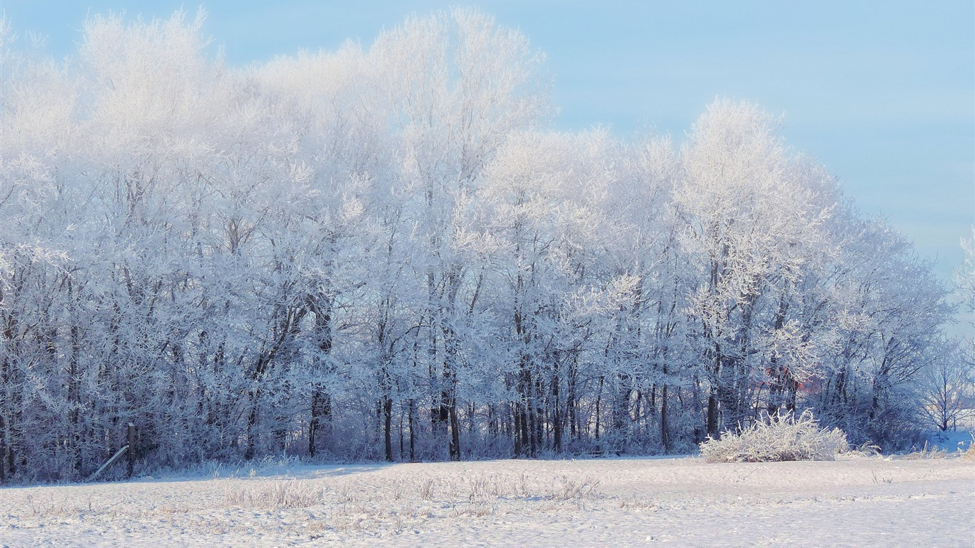 冬の森の雪の木 風景高品質壁紙プレビュー 10wallpaper Com