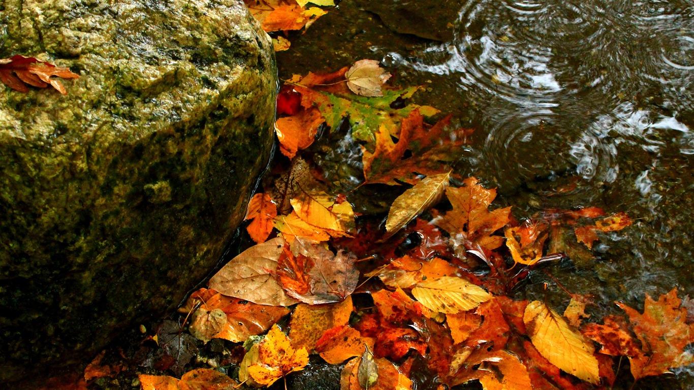 Autumn Leaves Water Windows 10 Desktop Wallpaper Preview