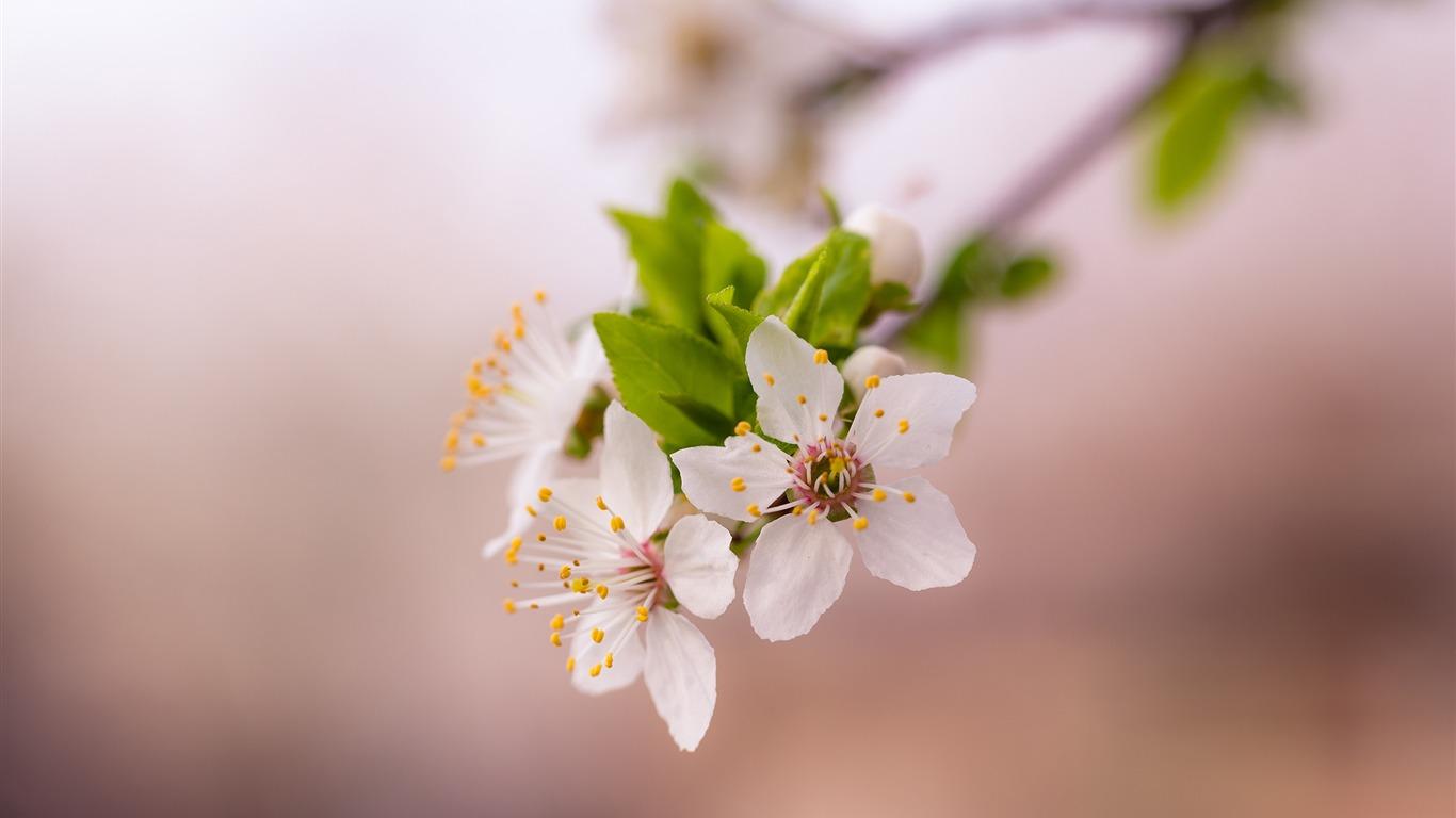 Flor De Primavera Floracion Flor Naturaleza Fondo De Pantalla Hd