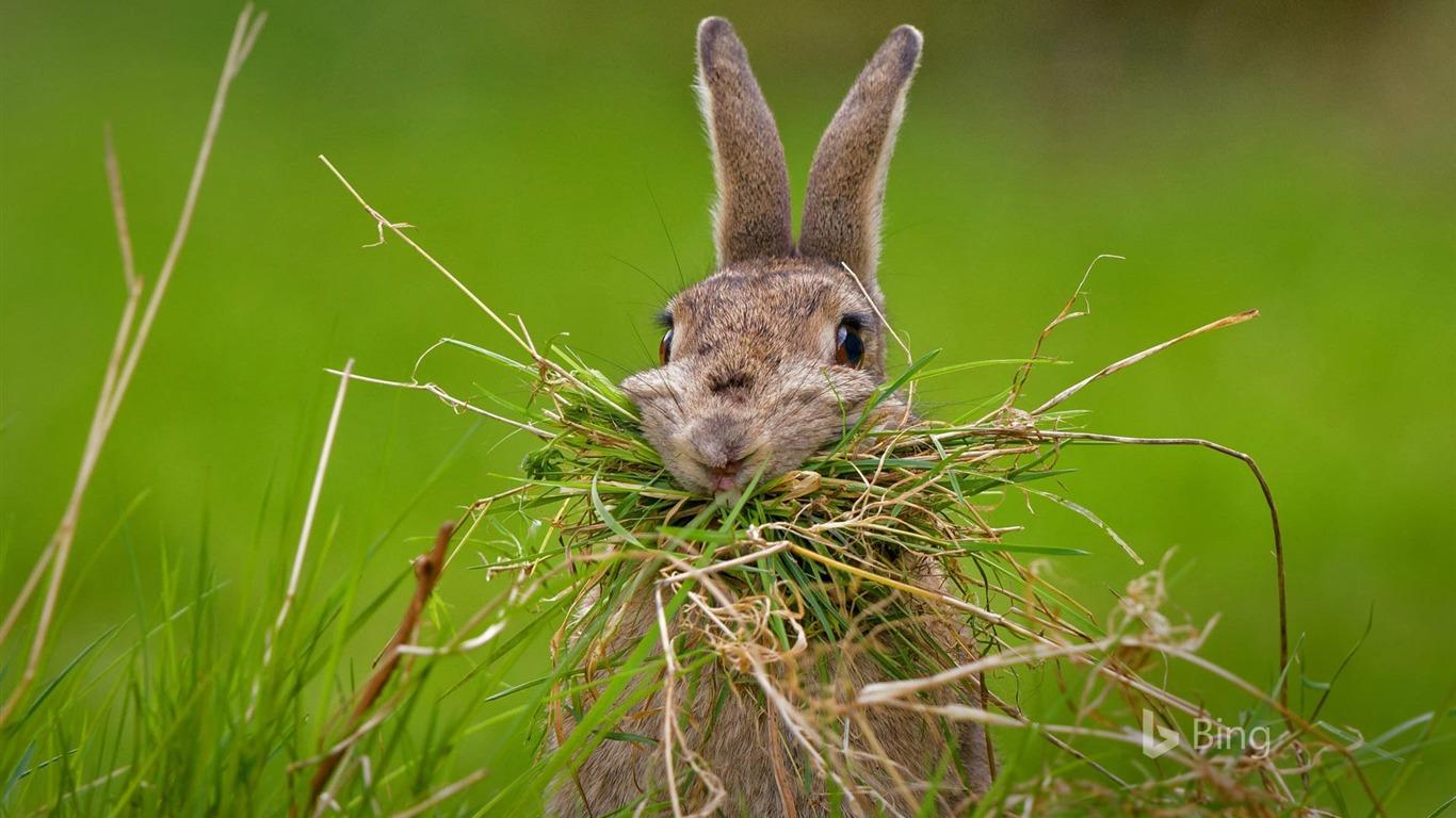 巣作りのウサギ 2017 Bingの壁紙プレビュー 10wallpaper Com