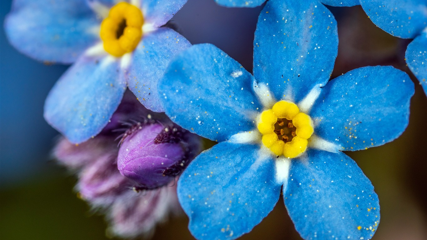 Beautiful_Blue_Flower_Bright_Photography