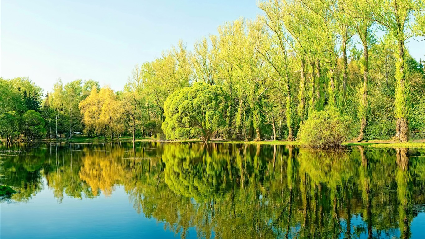 Forest summer sunshine trees lake reflection - 1366x768 wallpaper download