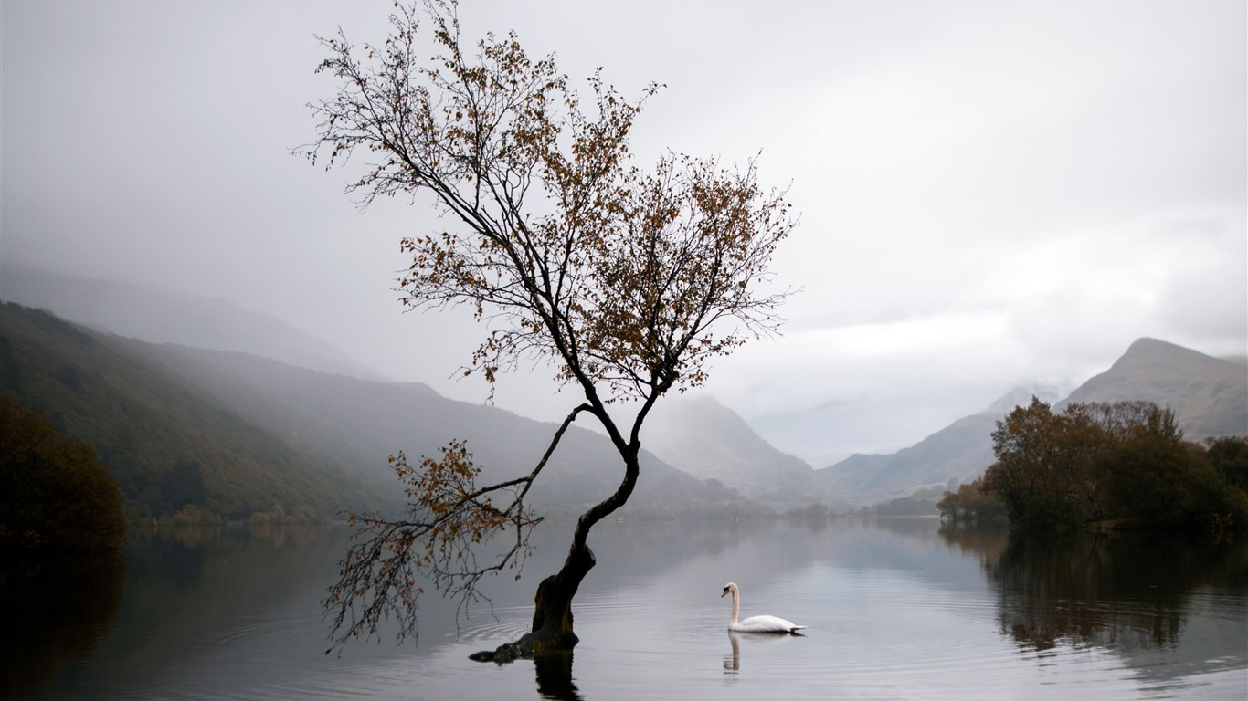 Lake_Swan_Autumn_Mist_2020_Nature_HDR_Photography2020.4.2