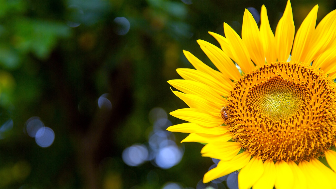 Sunflower_Petal_Sunshine_2021_Flower_Plant_HD_Photo2020.12.31