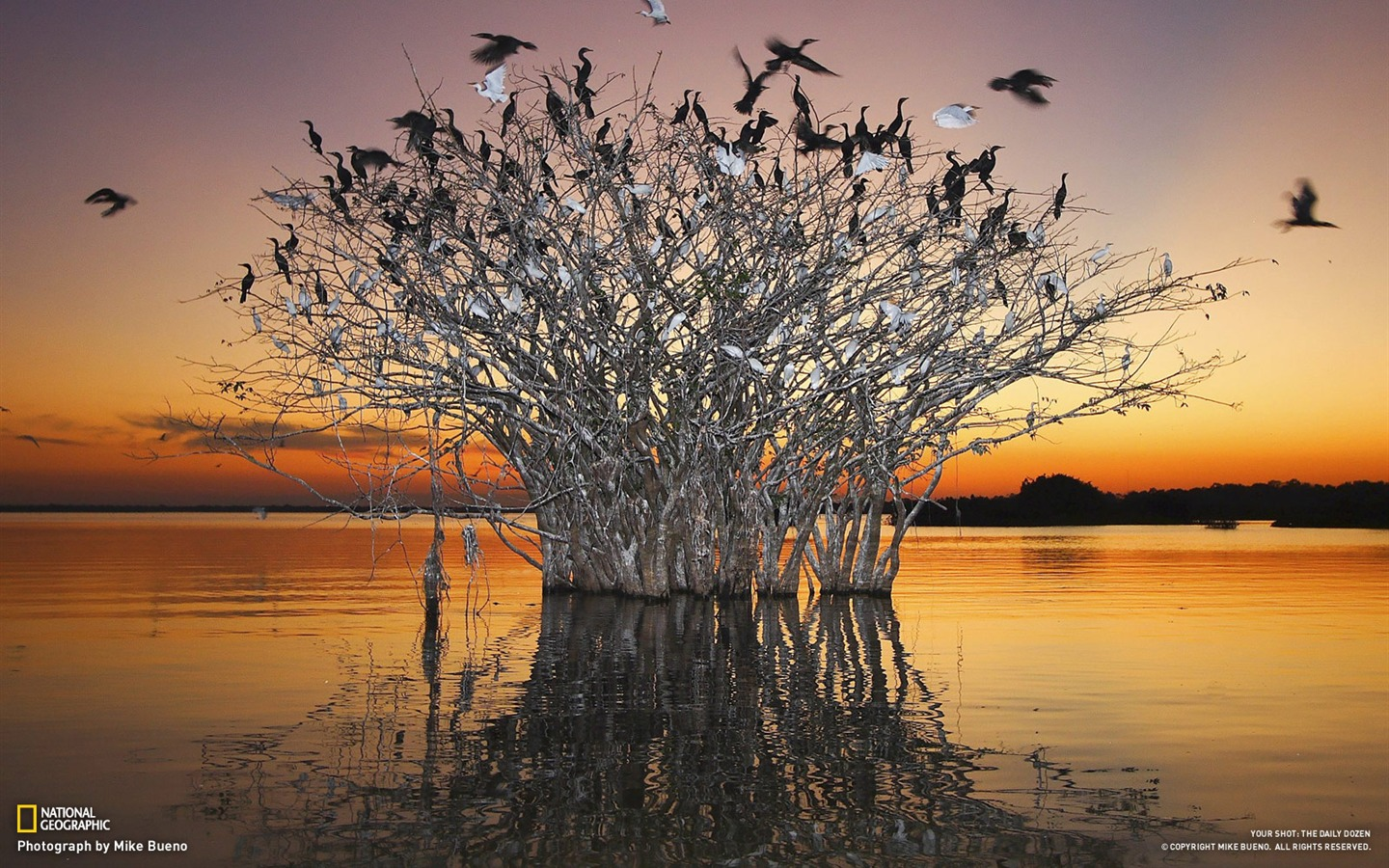 Photo Of The Day: Pantanal Wetlands Of The Birds-National Geographic-Photo