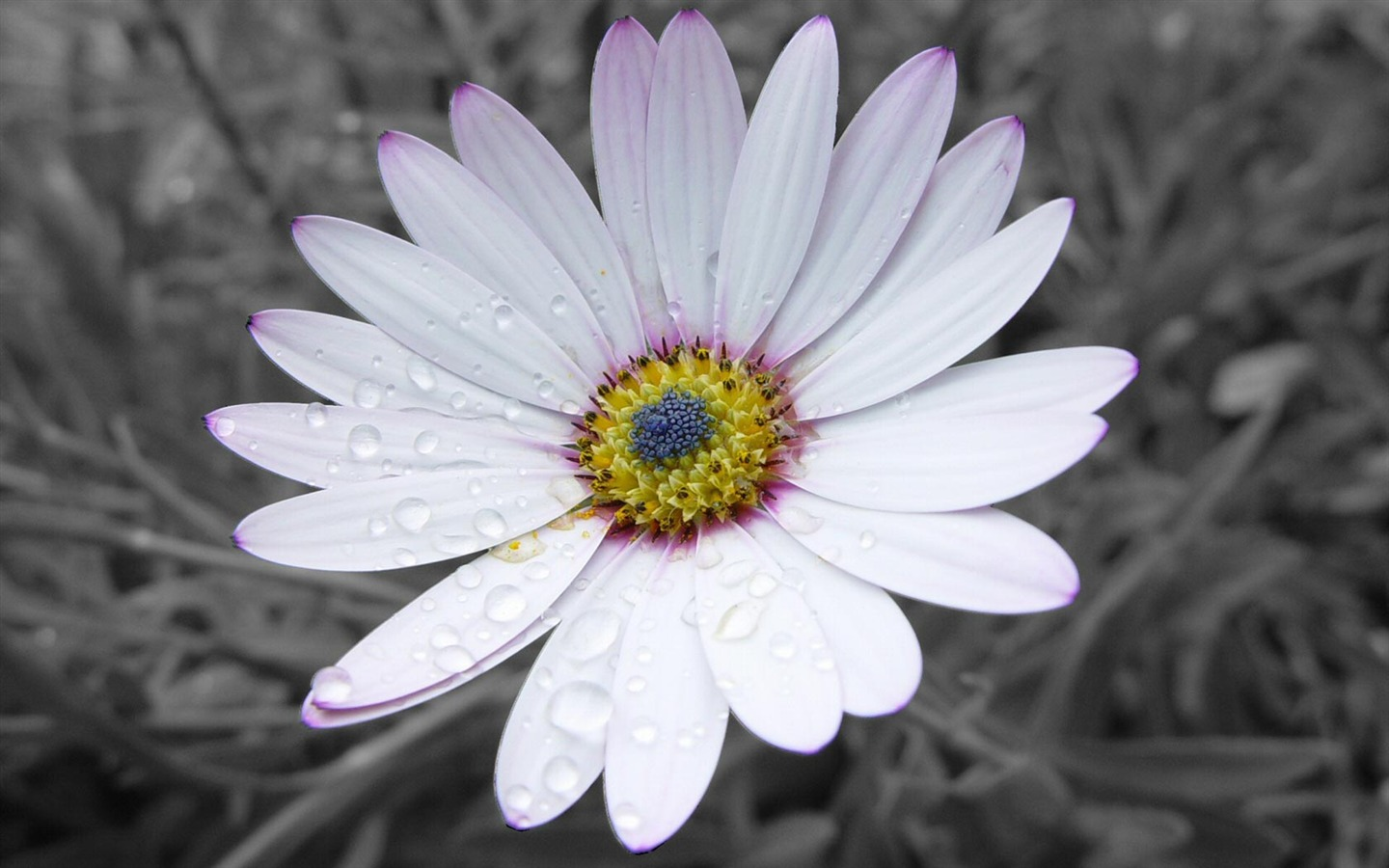 Simple white flowers-Flower HD photography photos Preview ...