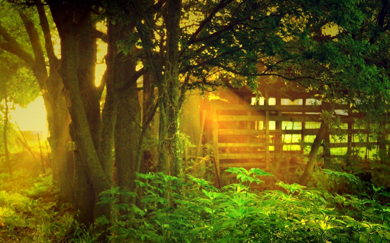 阳光透过树木 美丽的大自然风光桌面壁纸