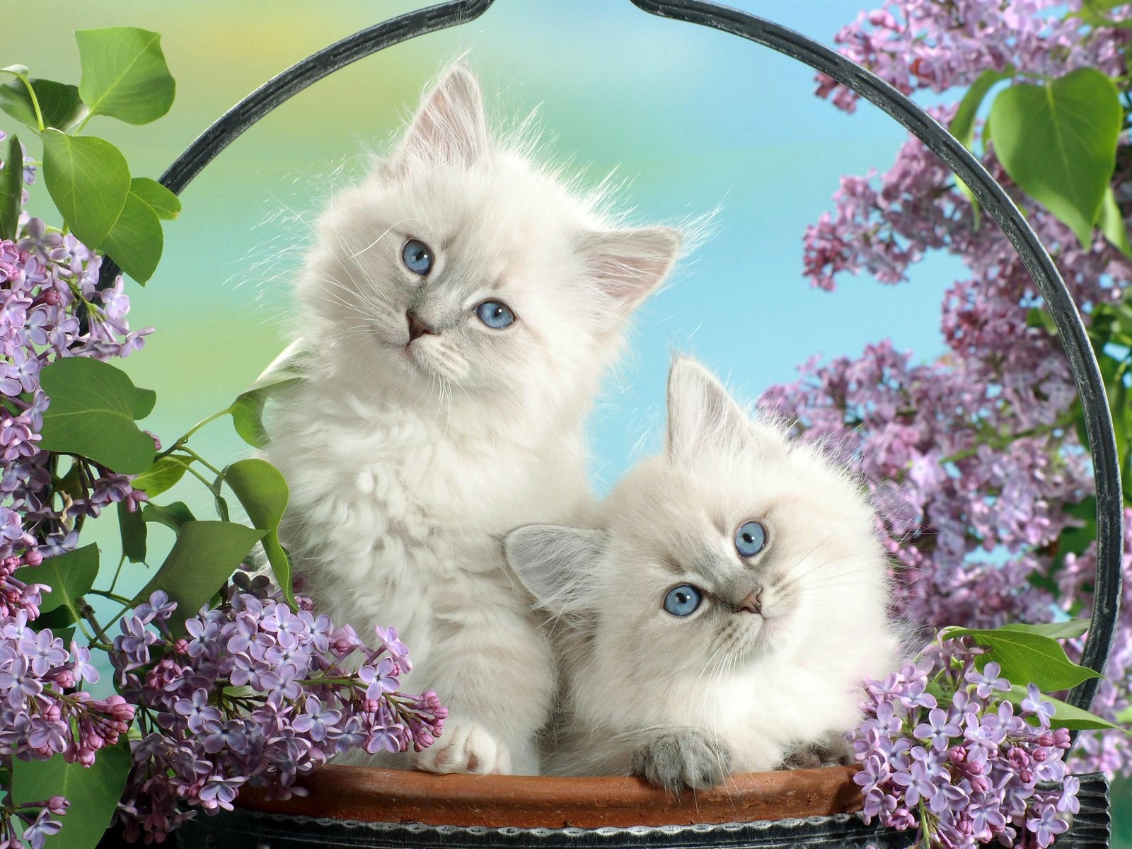 Basket Of Small White Fun Cat Wallpaper Preview