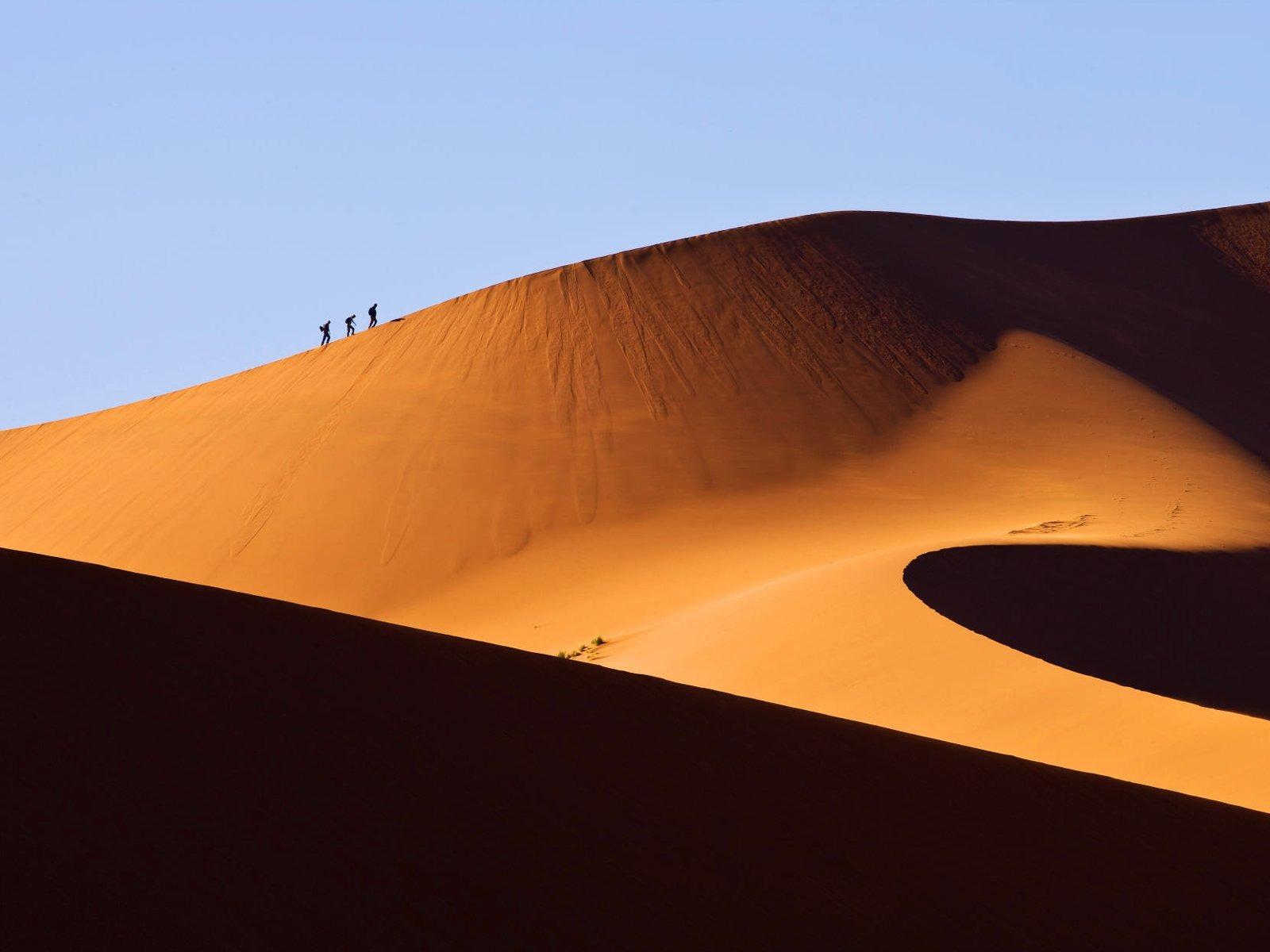 ナミブ砂漠の画像 p1_16