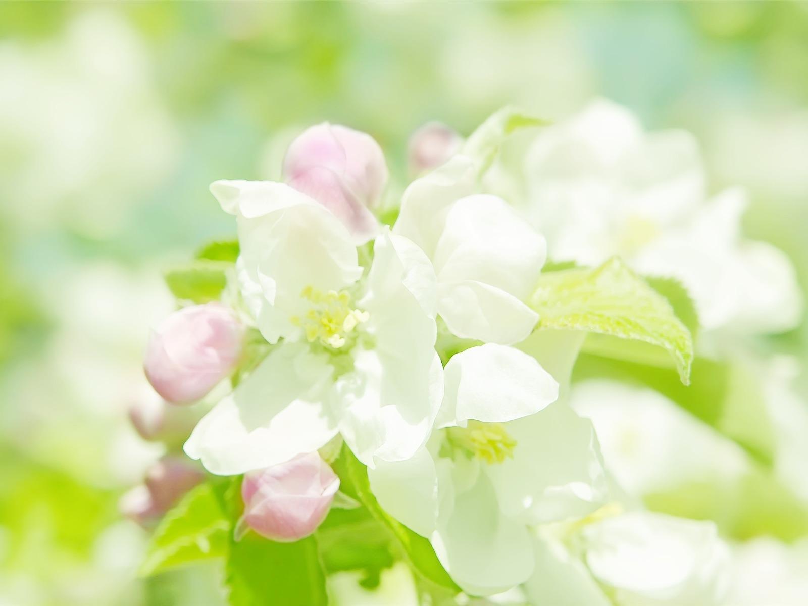 printemps fleurs floraison fond d 39 cran aper u. Black Bedroom Furniture Sets. Home Design Ideas