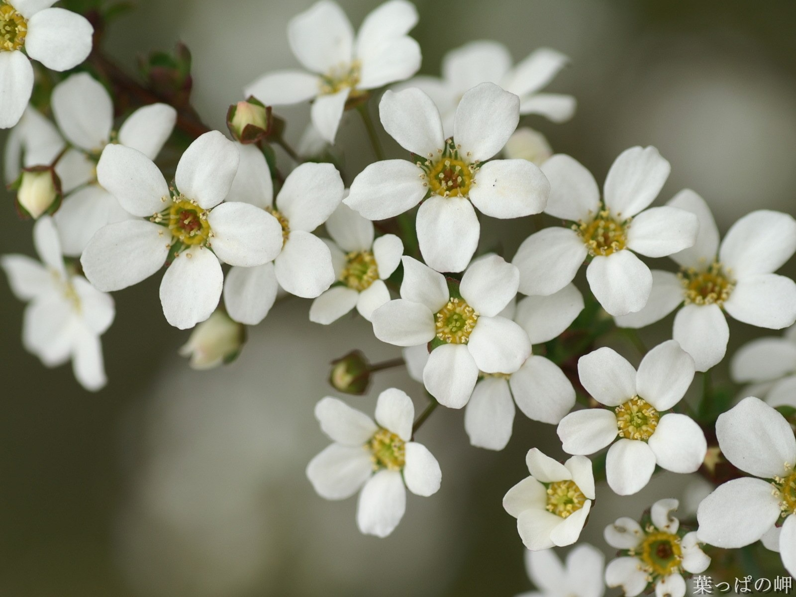 Macro White Flower Hd Flowers Photography Preview 10wallpaper