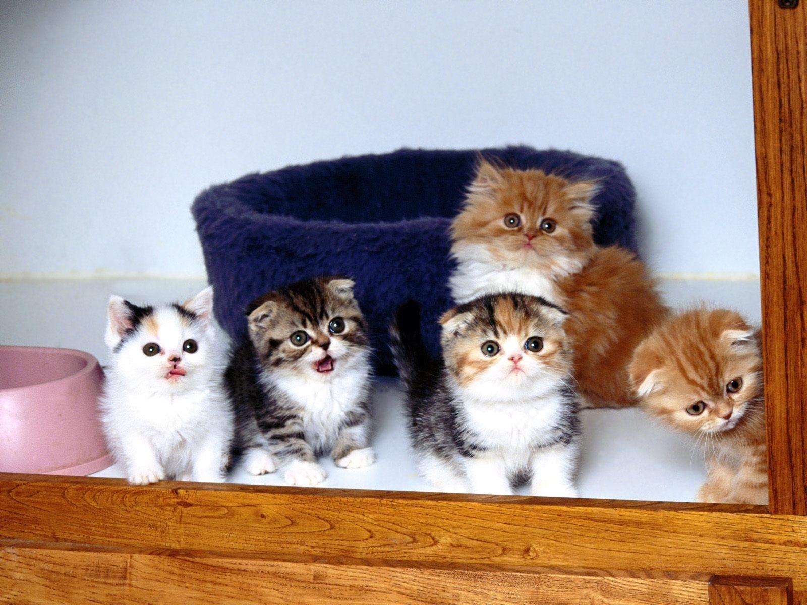 猫の仲間 かわいいキティの猫の生活壁紙プレビュー 10wallpaper Com