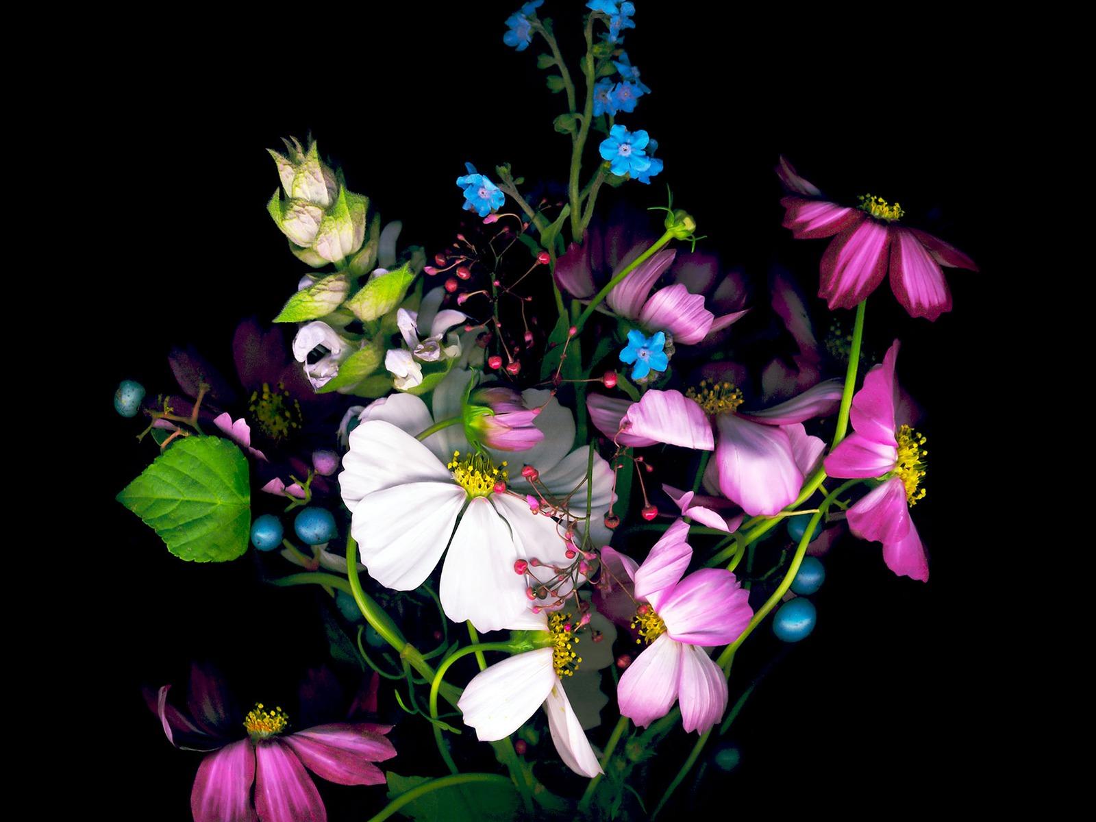 Dark Flower-Apple IOS8 IPhone6 Plus HD Wallpaper Preview