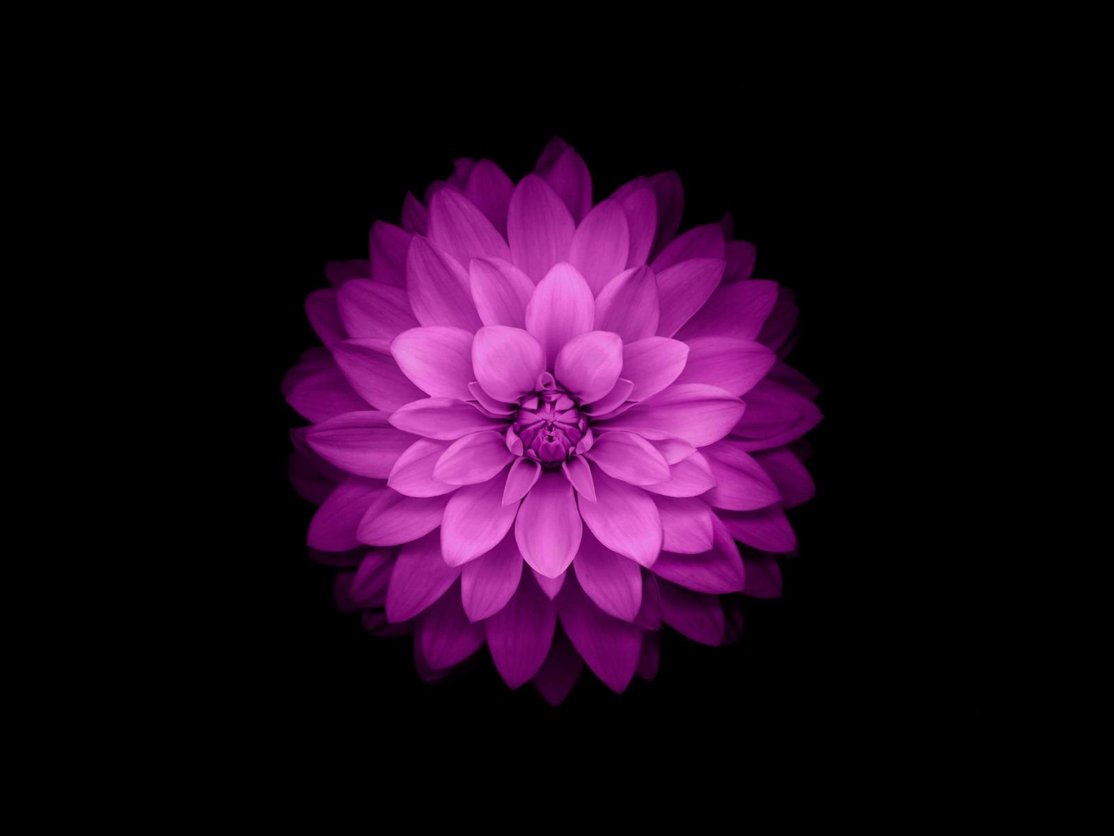 Iphone紫の花 高品質の壁紙プレビュー 10wallpaper Com