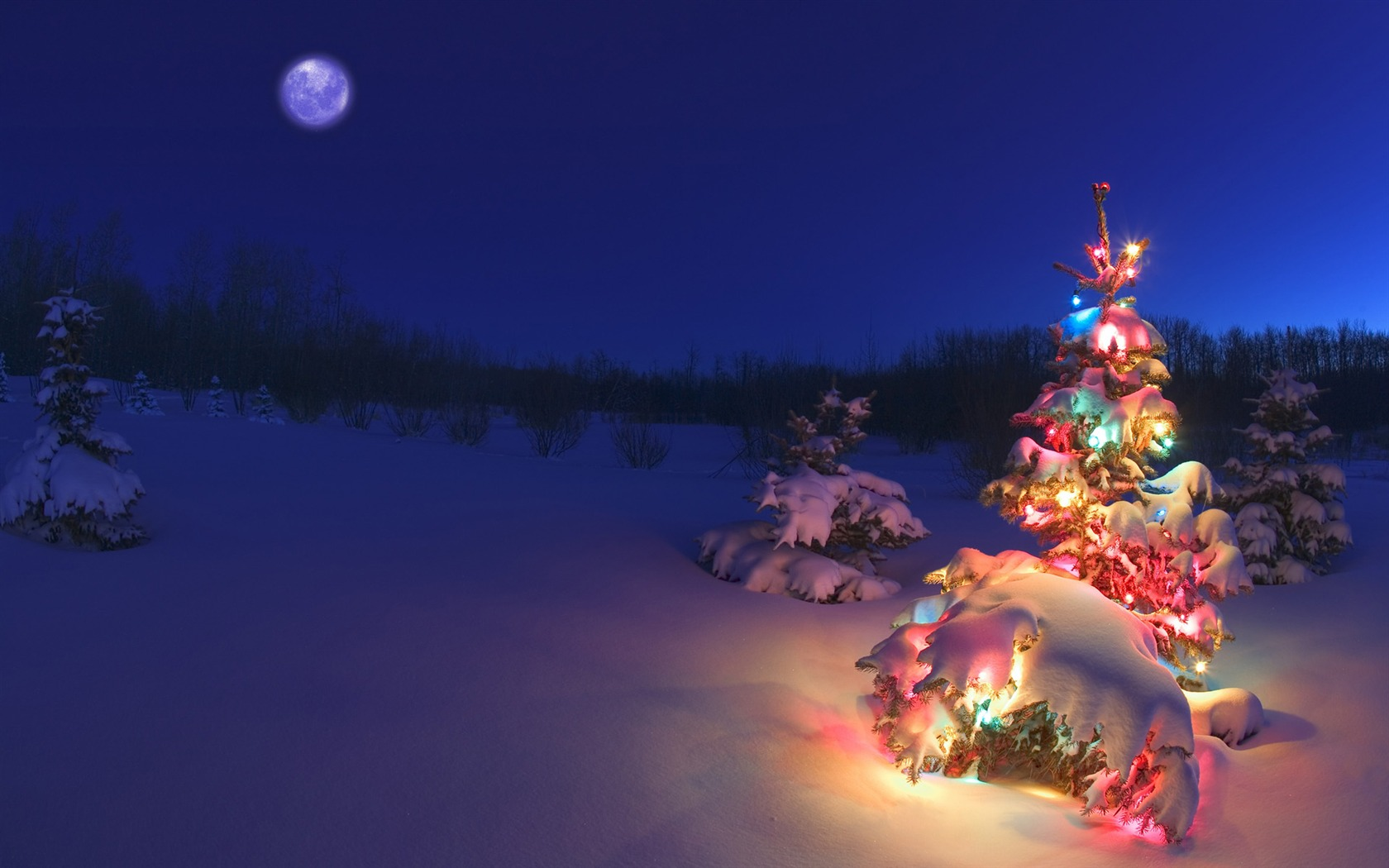 Snow covered christmas tree lights wallpaper