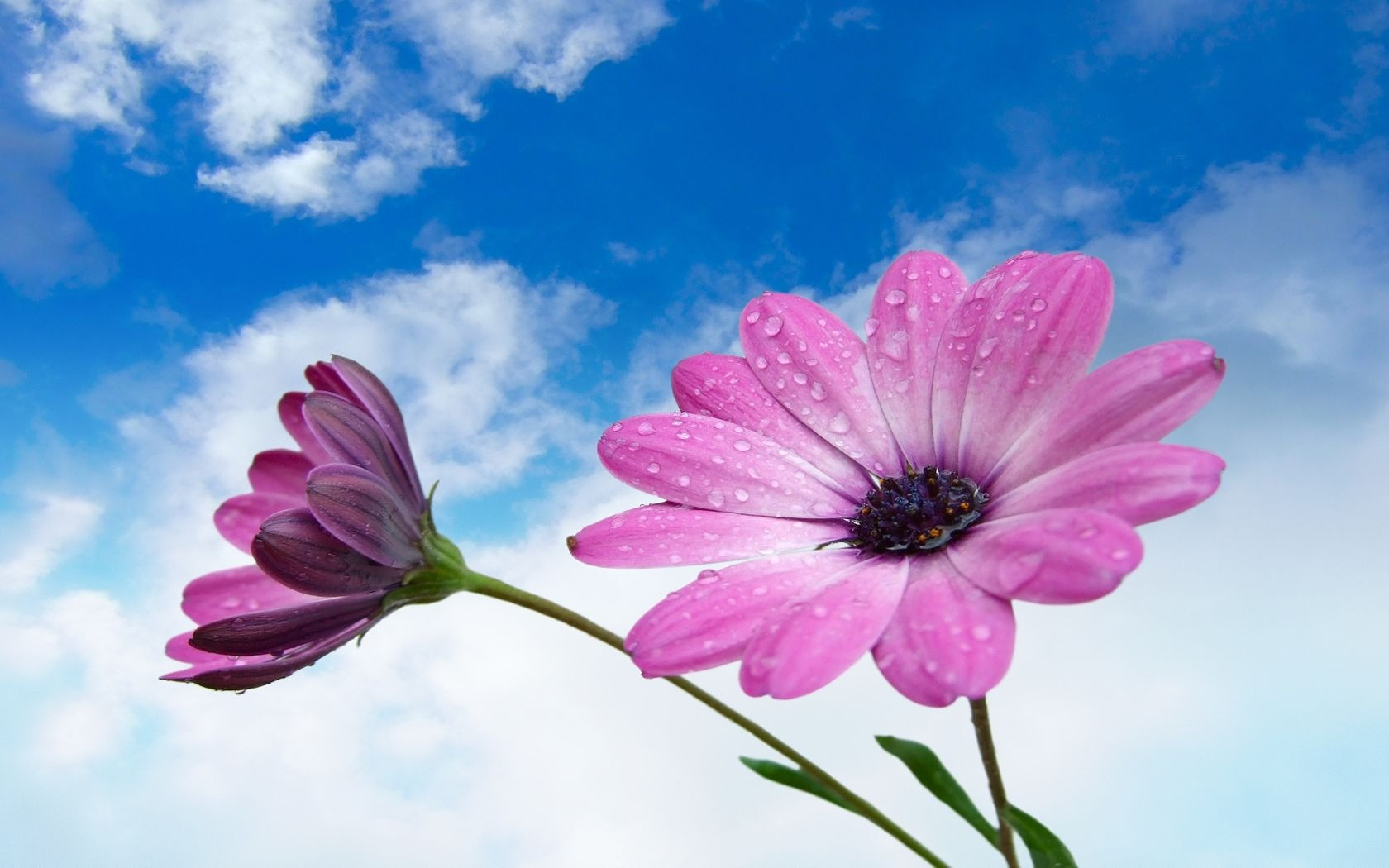 wallpaper sky under flowers - photo #24