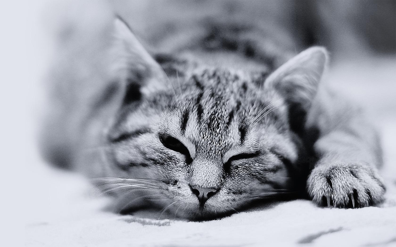猫黒と白 かわいいキティの猫の生活壁紙プレビュー 10wallpaper Com