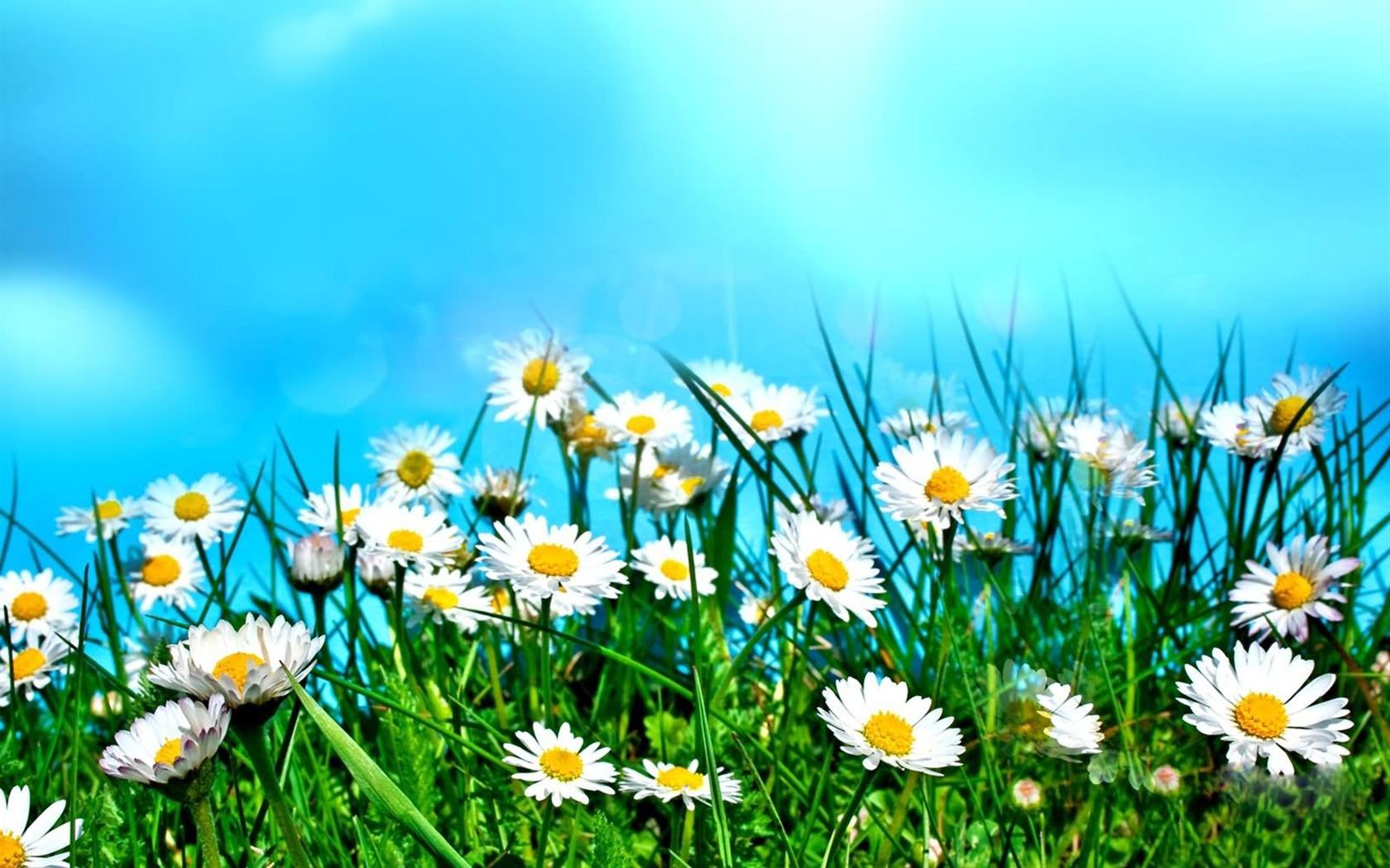 Flower Field Under Sky Flowers Photography Desktop