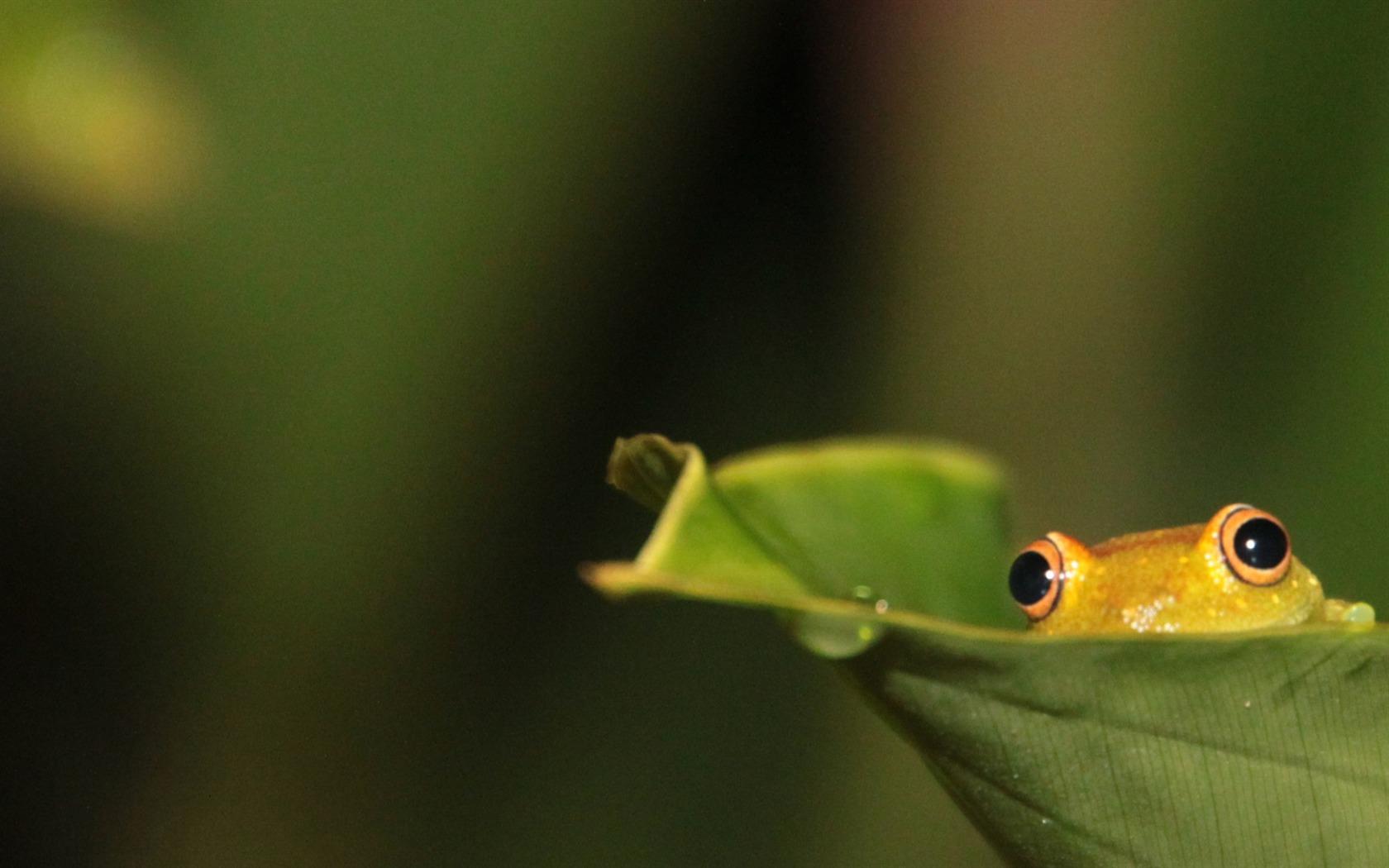 チラ見するカエルがかわいい