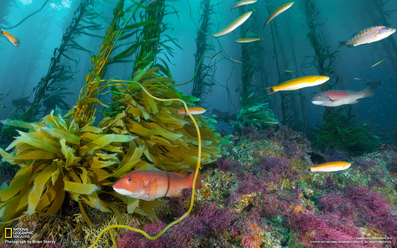 Wallpaper download national geographic - Seamount Cortes Bank National Geographic Wallpaper 1680x1050 Wallpaper Download