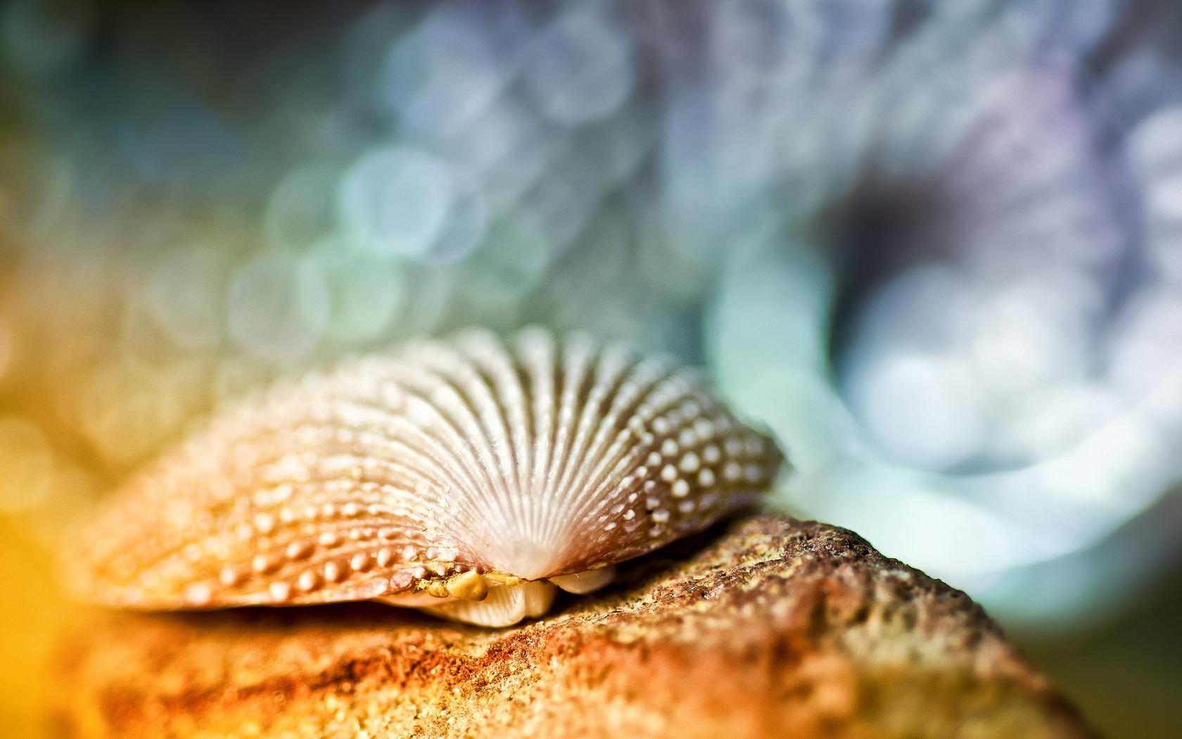 貝殻 動物の写真の壁紙プレビュー 10wallpaper Com